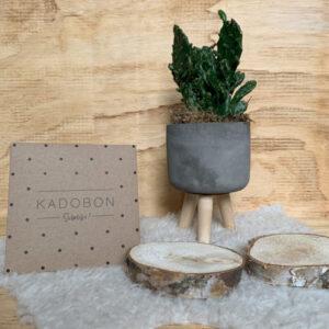 cadeaubon-giftcard-pavona